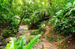 Wild Colombian Darien jungle Stock Photography