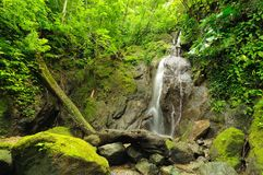 Wild colombiansk Darien djungel royaltyfria bilder