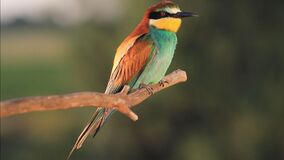 Wild colored bird in the sunset