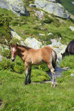 Wild colt on a brook bank. On summer time Stock Photos