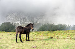 Wild colt in the mountain. With fog Stock Photography
