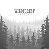 Wild coniferous forest background. Pine tree, landscape nature, wood natural panorama. Outdoor camping design template. Vector illustration Stock Photos