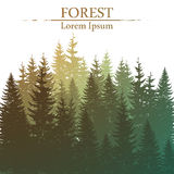 Wild coniferous forest background. In vector royalty free illustration