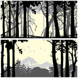 Wild coniferous forest. Panorama of wild coniferous forest backgrounds set stock illustration