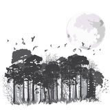 Wild coniferous forest Stock Photo