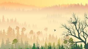 Wild Coniferous Wood In Morning Fog. Stock Photo
