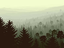 Wild coniferous wood in morning fog. Royalty Free Stock Photos