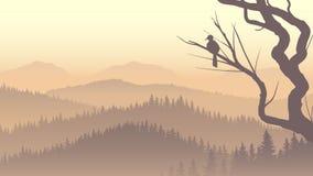 Wild coniferous wood in morning fog. Stock Photos