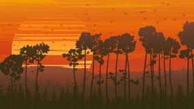 Wild coniferous wood at sunset. Horizontal orange illustration coniferous forest at sunset with flock of birds Royalty Free Stock Photography
