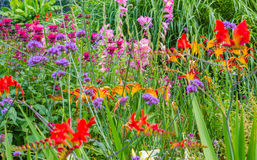 Wild Country Garden Flowers. A multitude of wild and domestic flowers in a country garden Stock Photography