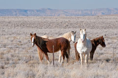 Wild country out back horses Stock Photos