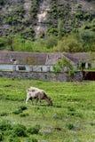 Wild countryside and farming Moldova Royalty Free Stock Image