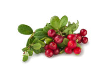 Wild Cowberry with leaves Royalty Free Stock Images