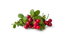 Wild Cowberry with leaves Royalty Free Stock Photography