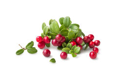 Wild Cowberry with leaves Stock Photos