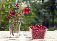 Wild cranberries Royalty Free Stock Image