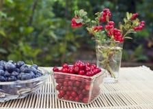 Wild cranberries Stock Photo