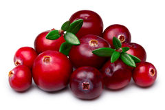 Wild cranberries isolated Royalty Free Stock Photography