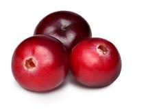 Wild cranberries isolated Stock Photo