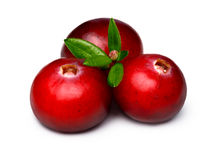 Wild cranberries isolated Royalty Free Stock Photo