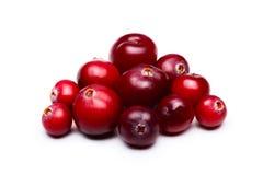 WIld cranberries Stock Photography