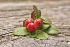 Wild cranberries stock photos