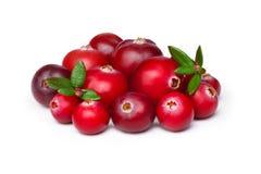 wild cranberry Arkivbild