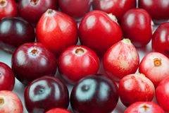 Wild cranberry color shape variation. Red ripe berries macro view. copy space. studio photo Stock Photo