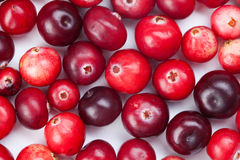 Wild cranberry color variation. Red, ripe cranberries macro view. copy space. studio photo Stock Images