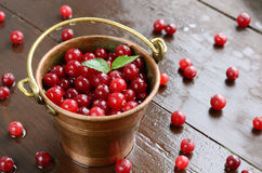 Wild cranberry in little brass bucket Royalty Free Stock Photos