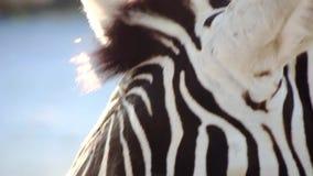 Wild creatures poetry stock video footage
