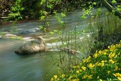 Wild creek. Yello flowers growing by the wild creek Stock Image