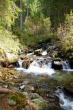 Wild creek Stock Photos
