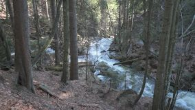 A wild creek in bavarian forest stock footage