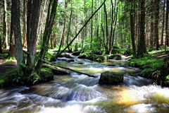 Wild creek Stock Photo