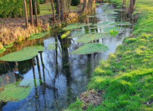 Wild creek with duckweed Stock Photo