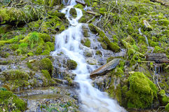 Wild creek falling down a hill Royalty Free Stock Photos