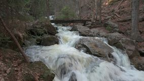 A wild creek in the bavarian forest stock video