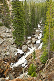A wild creek in Rocky mountains Stock Images