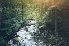 Creek in untouched forest. Wild creek in untouched forest Royalty Free Stock Photos