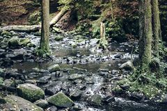 Creek in untouched forest. Wild creek in untouched forest Royalty Free Stock Image