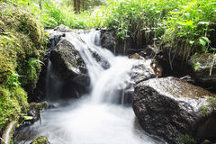 Wild Creek Waterfall in the Forest with Green Vegetation Stock Photo