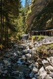 Wild creek royalty free stock photography