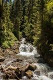 Wild creek Stock Photography