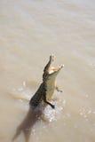Wild Crocodile Royalty Free Stock Photos