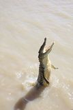 Wild Crocodile Royalty Free Stock Photo