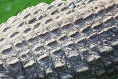 Wild crocodile skin pattern Royalty Free Stock Images