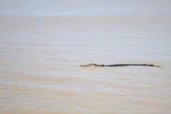 Wild Crocodile Royalty Free Stock Photography