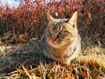Wild cute cat. A wild cat sitting on a grass land outside Stock Photos