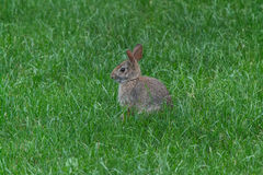Wild cute rabbit Stock Photo